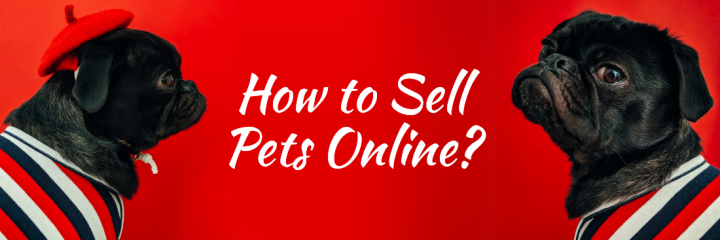 How to Sell Pets Online? 7-Step Process to Start Your Online Pet Shop